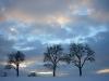 38 cottage trees_16.11.07