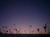 88 winter grass_9.1.09